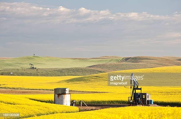 Three Pumpjacks in Beautiful Rolling Oil Field in Alberta