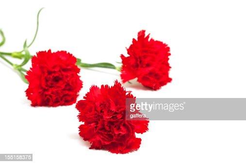 three red carnations