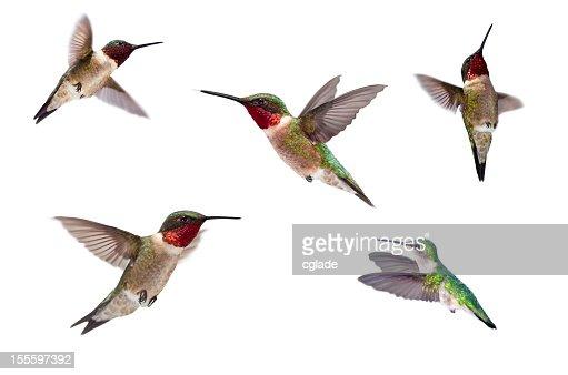 Three Ruby Throated Hummingbirds Idolated on White