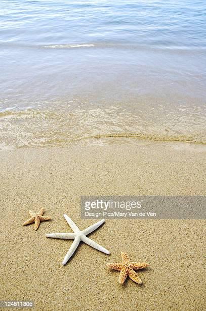 Three seastars on sand with ocean washing in.