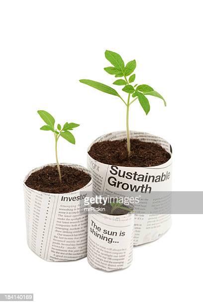 Three seedlings in newspaper plant pots
