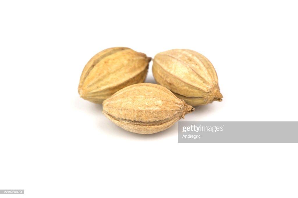 Three seeds of coriander : Stock Photo