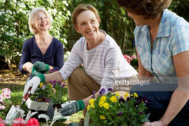 Three senior women planting flowers in garden, smiling, close-up