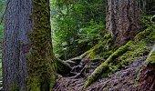 Northwest Oregon's Cascade Range. Willamette National Forest. Near Upper Proxy Falls.