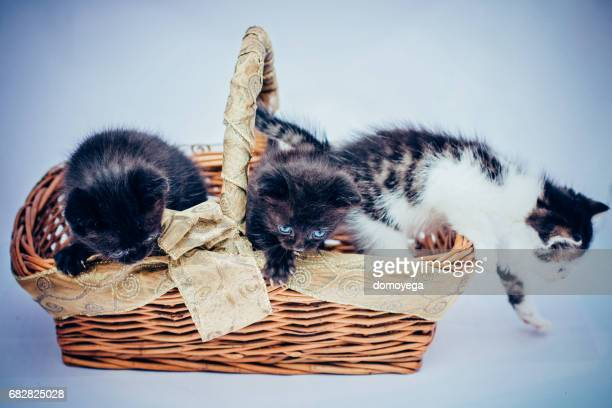 Three small cats in basket