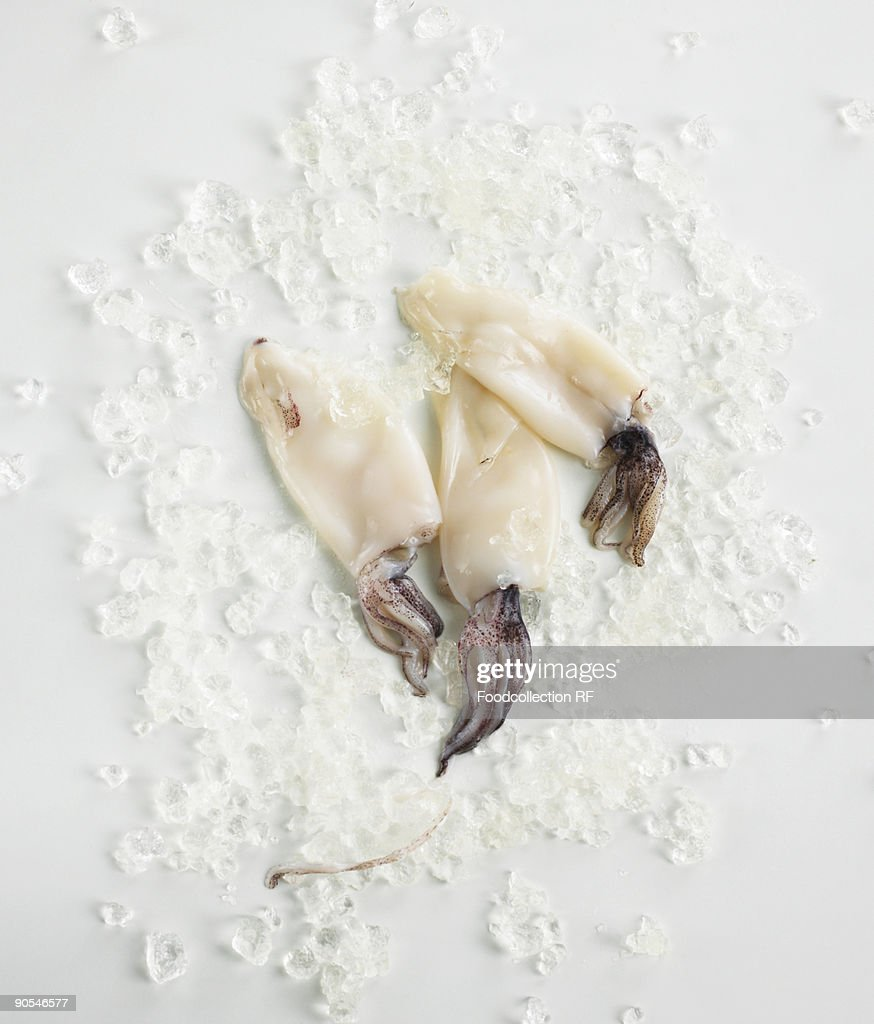 Three squid on crushed ice, close up