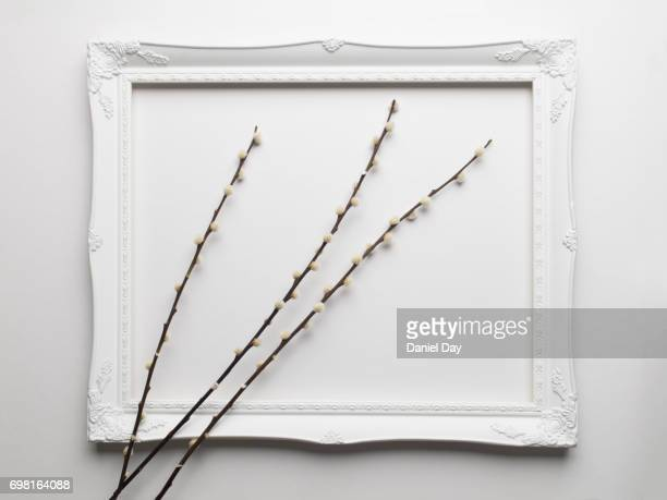 Three stems of bunny tail grass lying within a white picture frame on a white background