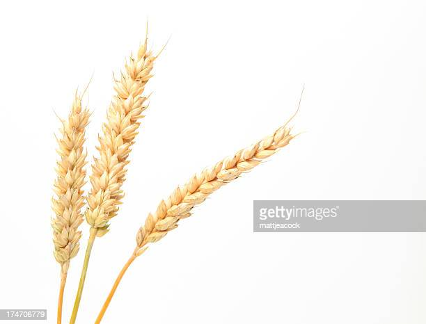 Three stems of wheat on a white background.