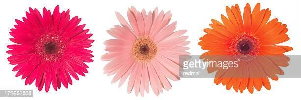 three times flower