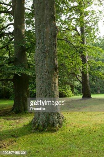 Three trees on grassy bank : Stock Photo