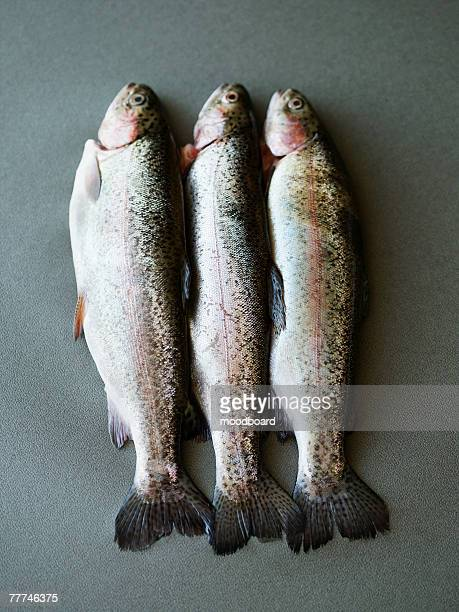 Three Trout
