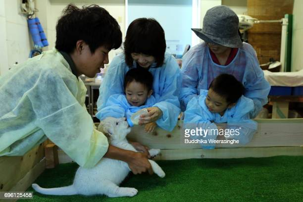 Three weeks old twin white lion cubs are seen being fed by lion fans during the fifth day of Lion Cub Premium Tour program at an animal hospital at...