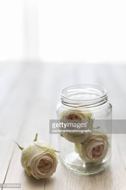 Three white roses on table