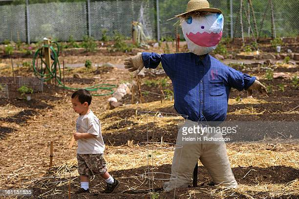 Three year old Johnny Smith runs past a scarecrow in the new community garden He and his brother Danny Acree not shown helped stuff the hands with...