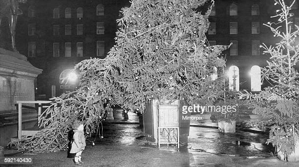 Three years old Mary Day of Highfield Gardens Liverpool was one who going to have a look at Liverpool's Christmas tree on St George's Plateau was...