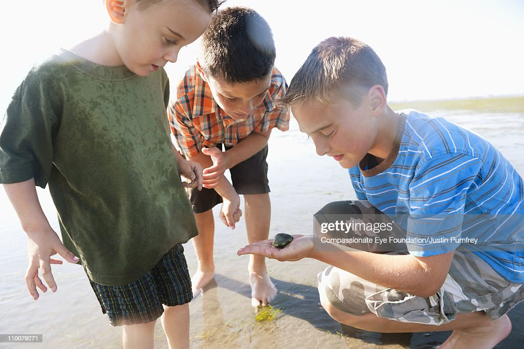 Three young boys looking at a seashell : Stock Photo