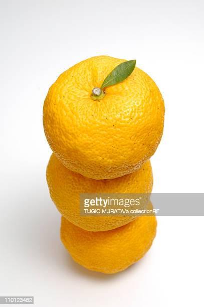 Three Yuzu Fruits