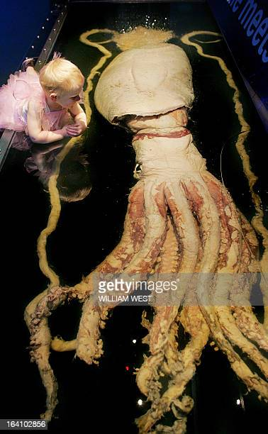 STORY Threeyearold Clea Gadsby looks at a ten metre long giant squid at a marine exhibit in the Melbourne Museum on December 15 2005 Scientists on...