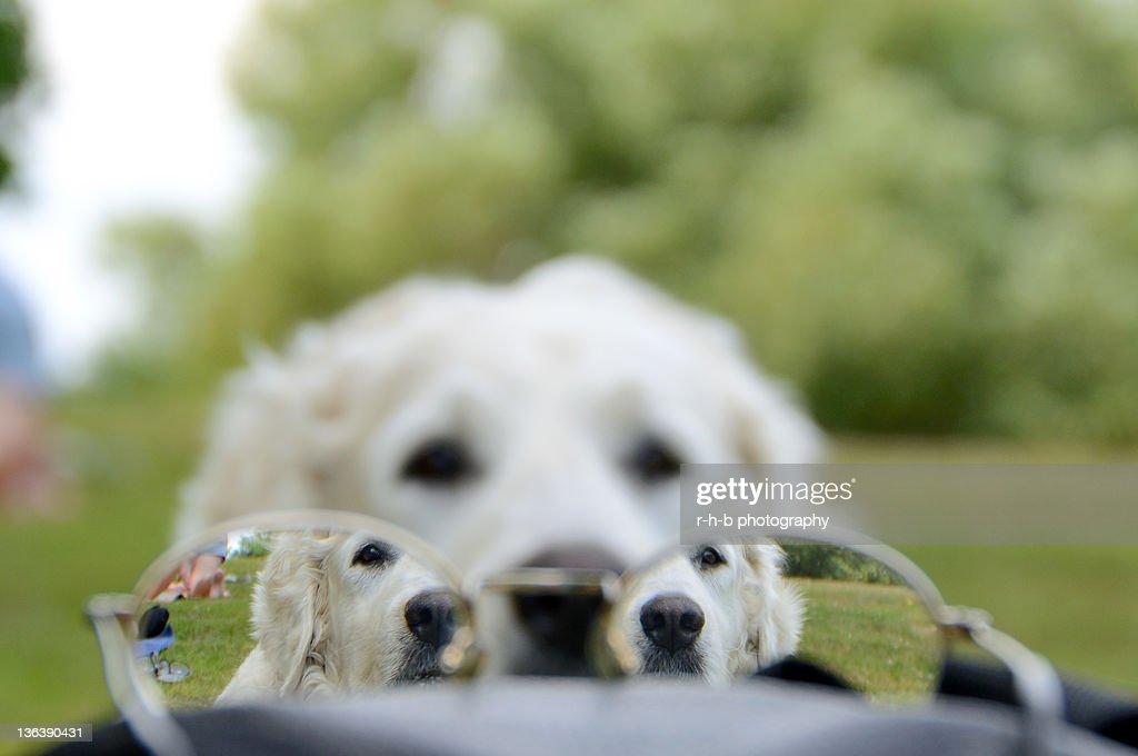Through glasses : Stock Photo
