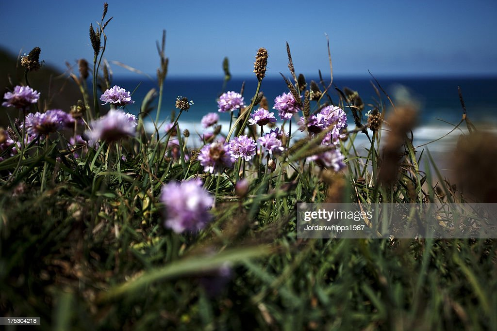 Through the grass : Stock Photo