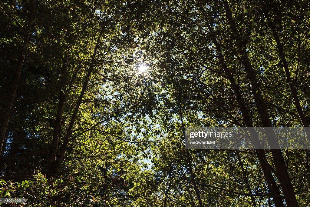 Através the trees-Expressão inglesa : Foto de stock