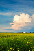 Thunderstorm Cloud Above a Canola Field