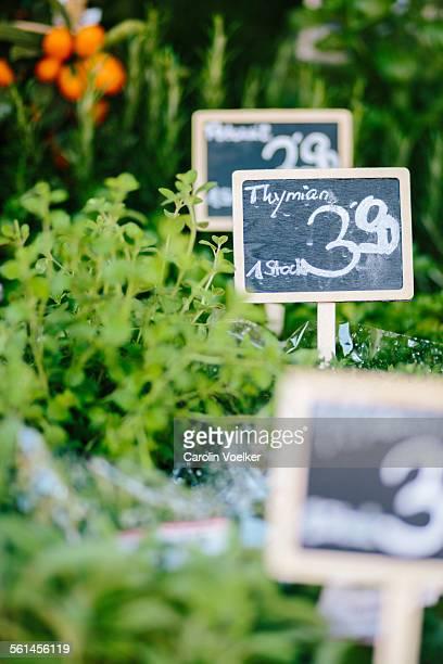 Thyme at Naschmarkt