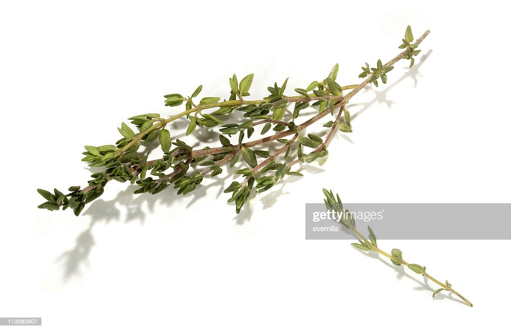 Thyme cut out on white