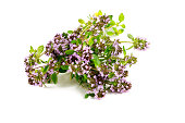 thyme flowers isolated on white