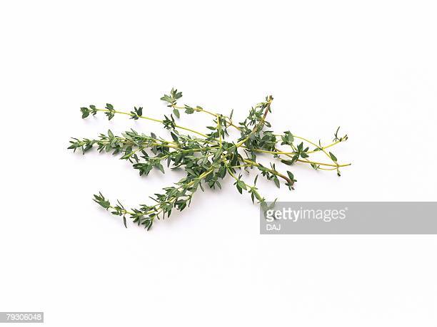 Thyme leaves, high angle view