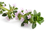 thyme with flowers isolated on white background