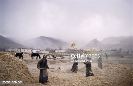 Tibet, Dongsa Village, farmers sifting wheat in field : Stock Photo
