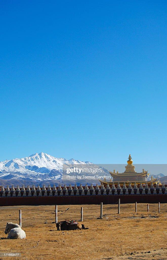 Tibet monastery in Tagong : Stock Photo