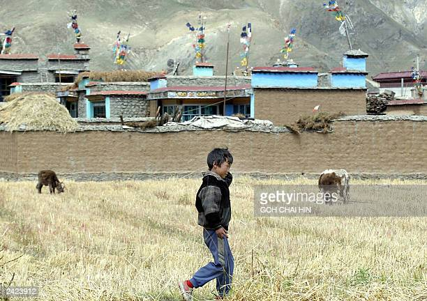 A Tibetan boy walks along a wheat field behind a Tibetan village in Tsethang 22 August 2003 In an attempt to extend its influence over the Himalayan...