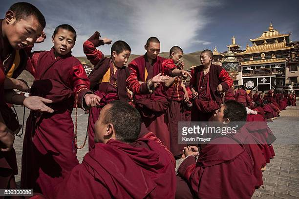 Tibetan buddhist monks who are prohibited from harvesting cordycep fungus debate on May 20 2016 outside the Sershul Monastery on the Tibetan Plateau...