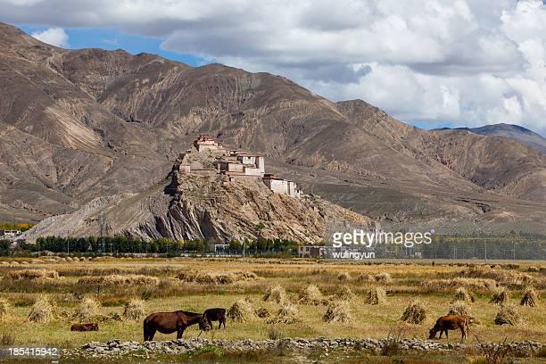 Tibetan castle and fields