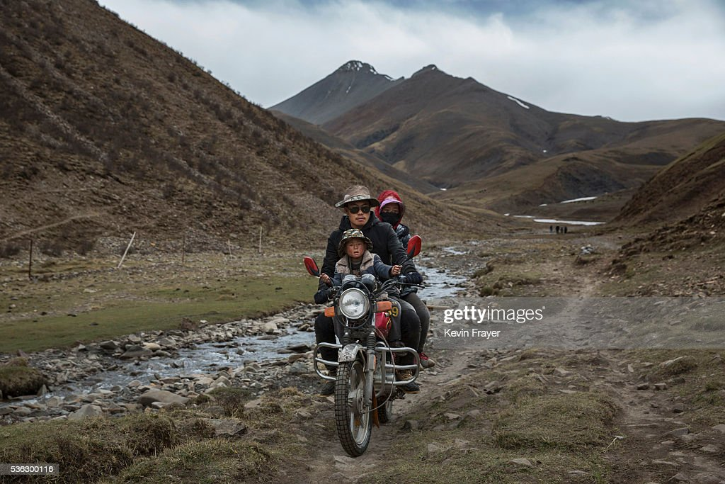 A Tibetan family ride on a motorcycle as they return after a day of working in the mountains at a temporary camp for cordycep pickers on May 23, 2016 on the Tibetan Plateau near Zadoi in the Yushu Tibetan Autonomous Prefecture of Qinghai province. The Tibetan Plateau is home to the cordyceps fungus, also known as caterpillar fungus, is a parasitic spore that thrives in high altitude, low temperature conditions on the Tibetan plateau. While not historically a part of Tibetan culture, cordyceps are a prized ingredient of traditional Asian medicinal treatments that purportedly heal ailments ranging from asthma to impotence to cancer. Demand in China alone has created a booming economy for what Tibetans call yartsa gunbu, or summer grass, winter worm, which sells for up to $50,000 US per pound. As the state-supported cordyceps industry has developed, Tibetans who rely primarily on farming and herding have turned to the weeks-long harvest as a means of earning income to last through the year. The annual gold rush has transformed parts of rural Tibetan areas, generating about 40% of the local economy. However, environmentalists increasingly warn that over-harvesting of cordyceps carries the cost of degradation to mountain grasslands that are essential for yak and cattle grazing. Due to below average rainfall the 2016 harvest is expected to be the lowest on record with many harvesters reporting yields way lower then expectations.