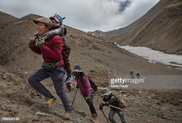 Tibetan man carries his child on his back as they climb at high altitude while picking cordycep fungus on May 23 2016 on the Tibetan Plateau near...