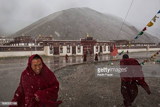 Tibetan monks get caught in a wet snowfall on May 20 2016 outside the Sershul Monastery an area well known for cordycep harvesting on the Tibetan...
