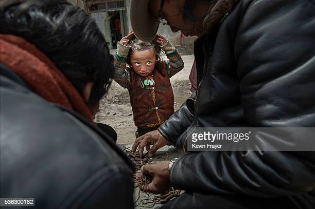 Tibetan nomad boy watches as vendors buy and sell cordycep fungus on May 20 2016 at a market in Sershul on the Tibetan Plateau in the Garze Tibetan...