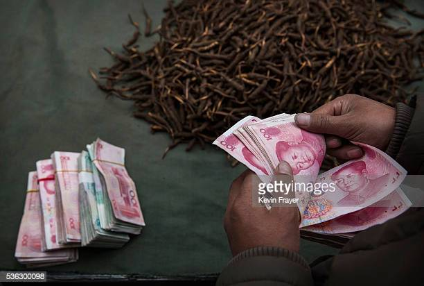 Tibetan nomad counts money after selling his cordycep fungus at a market on May 22 2016 on the Tibetan Plateau in Yushu town in the Yushu Tibetan...