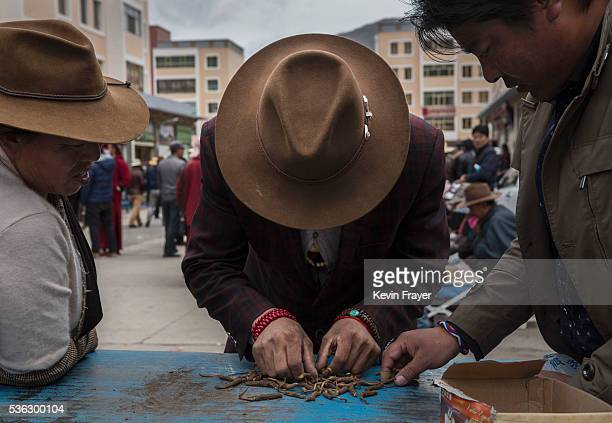 Tibetan nomad lays out his cleaned cordycep fungus for sale at a market on May 22 2016 on the Tibetan Plateau in Yushu town in the Yushu Tibetan...