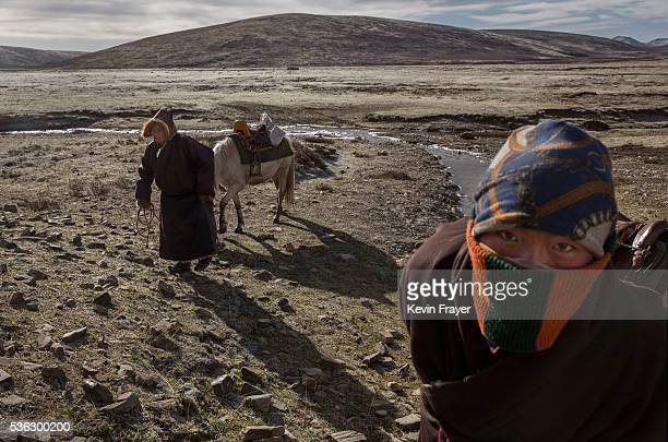Tibetan nomads walk their horses as they head to sell the cordycep fungus they harvested on May 20 2016 near Sershul on the Tibetan Plateau in the...
