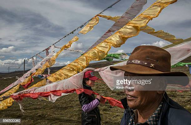 Tibetan nomads woman stand amongst prayer flags placed at their camp for picking cordycep fungus on the 15th day of Saka Dawa the holiest day of the...
