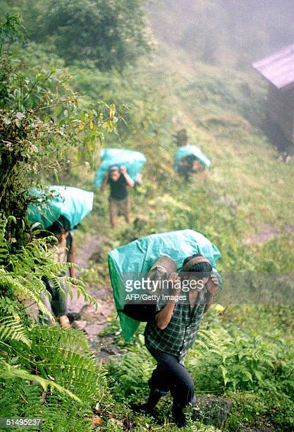 Tibetan porters accompany a group of trekkers up a mountain trail in the jungles of Sikkim state in eastern India near the border of Tibet 01 October...