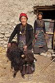 Tibetan woman holding a young yak, Upper Mustang. Nepal
