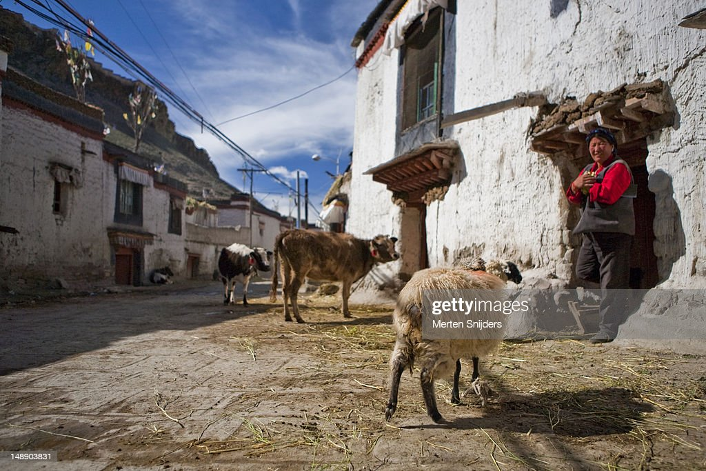 Tibetan woman stepping out of her house with livestock out front.