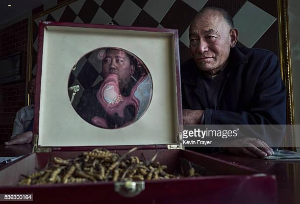 Tibetans display high quality cordycep fungus on May 18 2016 at their shop in Yushu on the Tibetan Plateau in the Yushu Tibetan Autonomous Prefecture...