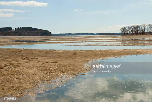 Tidal saltwater marsh