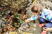 Child looking into a tide pool.